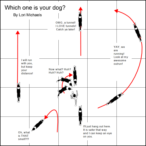 Dog orbit